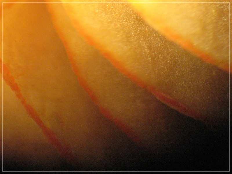 Orangeschneidiger Helmling